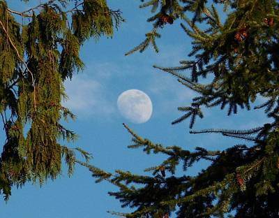 Moon Framed By Trees Art Print