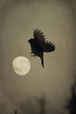 Photograph - Moon In Flight 1 by Emily Stauring