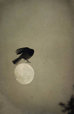 Photograph - Moon In Flight 11 by Emily Stauring