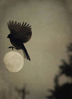 Photograph - Moon In Flight 12 by Emily Stauring