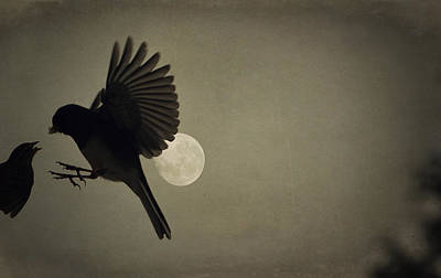 Photograph - Moon In Flight 13 by Emily Stauring