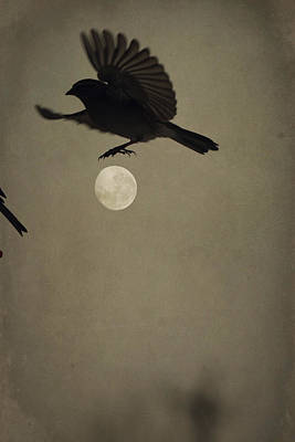 Photograph - Moon In Flight 4 by Emily Stauring