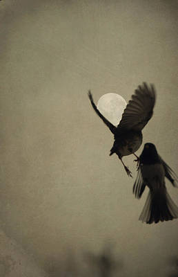 Photograph - Moon In Flight 5 by Emily Stauring