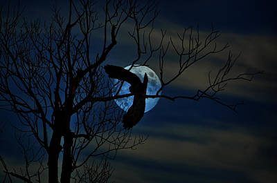 Photograph - Moon Leap by Emily Stauring