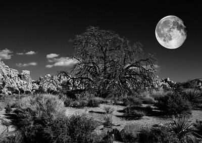 Photograph - The Old Oak by Sandra Selle Rodriguez