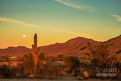 Photograph - Moon Over The Sonoran Desert by Robert Bales