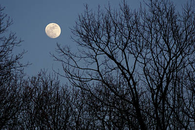 Moon Over Trees Art Print by Larry Bohlin