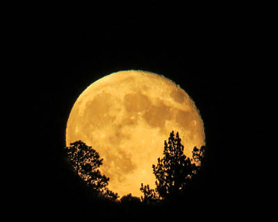 Moon Rise Over Pines Art Print by Dawn Key
