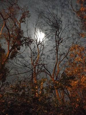 Moon Shiner Art Print by Guy Ricketts