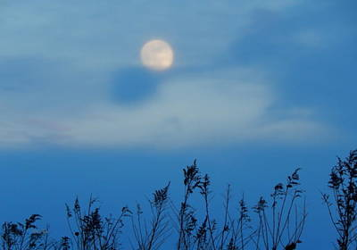 Photograph - Moon Stalked by Wild Thing