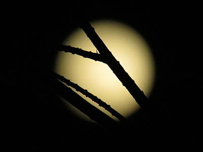 Moonscape Photograph - Moon Through The Branches by Zina Stromberg