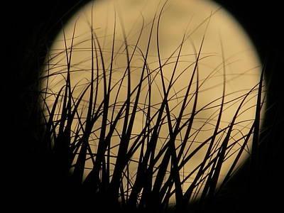 Moon Through The Palms Original by Zina Stromberg