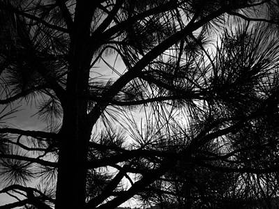 Photograph - Moon Through The Pine by Tarey Potter