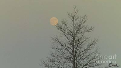 Moon Tree Fall Haze 12 10 2011 Art Print