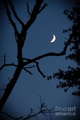 Photograph - Moon by Wayne Valler