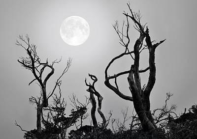 Moon Whisperer Art Print by Edwin Verin