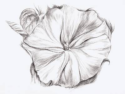 Drawing - Moonflower In Charcoal by MM Anderson