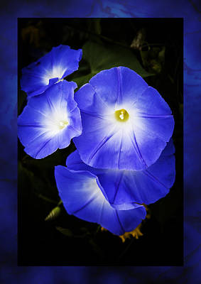 Moonglow On Blue Art Print