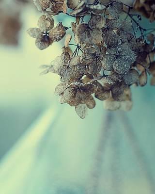 Dried Hydrangeas Photograph - Moonland by Studio Yuki
