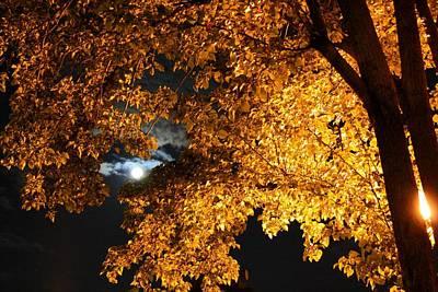 Moonlight Art Print by Dan Stone