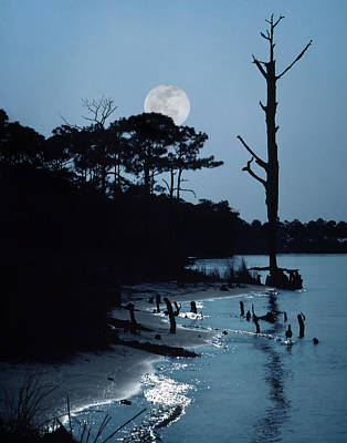 Photograph - Moonlight by David and Carol Kelly