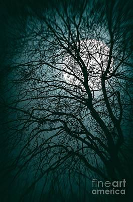 Full Moon Photograph - Moonlight Forest by Carlos Caetano
