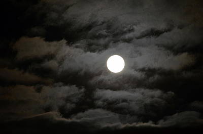Photograph - Moonlight Magic by Cathy Shiflett