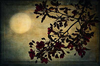 Moonlight Art Print by Maria Angelica Maira