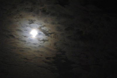 Art Print featuring the photograph Moonlight by Marilyn Wilson
