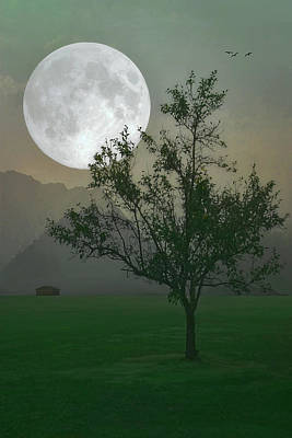 Moonlight On The Plains Art Print by Tom York Images