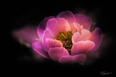 Photograph - Moonlight Peony by Kasandra Sproson