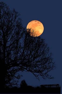 Photograph - Moonlight Sonata by Robert Camp