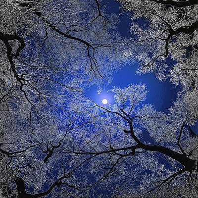 Digital Art - Moonlight Trees by Igor Zenin