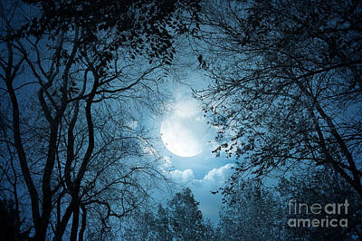 Moonlight With Forest Art Print by Boon Mee