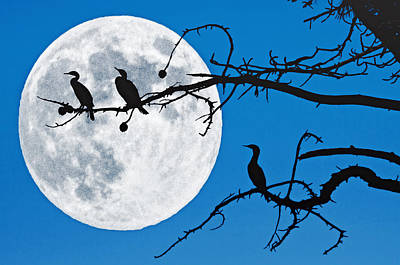 Photograph - Moonlit Cormorants by Donna Pagakis