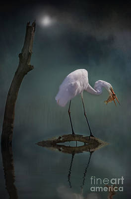 Photograph - Moonlit Egret by Kym Clarke