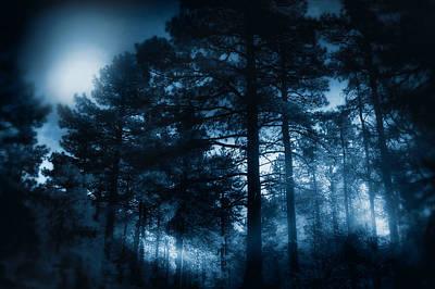 Photograph - Moonlit Night by Douglas MooreZart