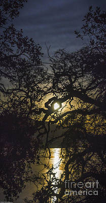 Clearlake Photograph - Moonlit Oaks by Mitch Shindelbower