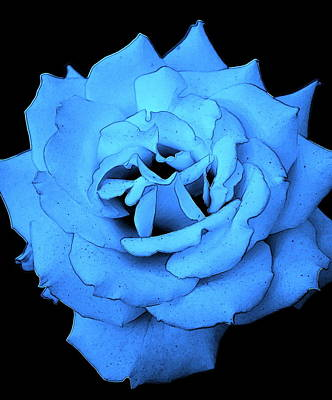 Digital Art - Moonlit Rose by Kathy Sampson