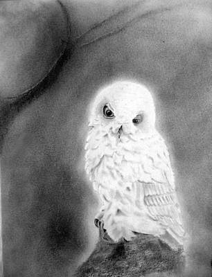 Drawing - Moonlit Snowy Owl by Derrick Parsons