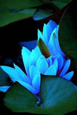 Photograph - Moonlit Waterlilies by Kathy Sampson