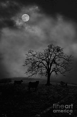 Moonlite Tree On The Farm Art Print by Dan Friend