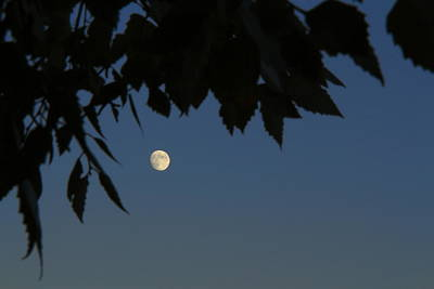 Southern Indiana Autumn Photograph - Moonrise by Andrea Kappler