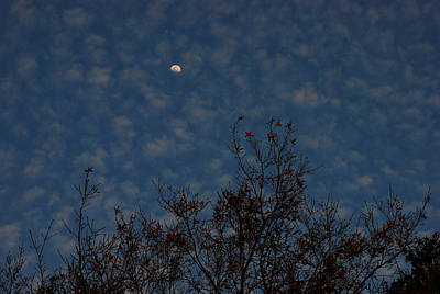 Photograph - Moonrise At Dusk by Carol Kay