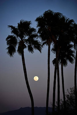 Photograph - Moonrise Over Tucson by Michael McGowan