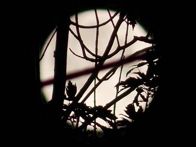 Photograph - Moonshine 8 by Aaron El-Amin
