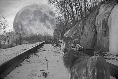 Winter Trees Digital Art - Moonshine Deer Tracks by Betsy Knapp