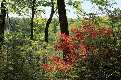 Photograph - Moore State Park Spring by Michael Saunders