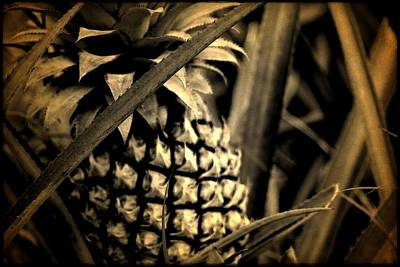 Moorea Pineapple Art Print