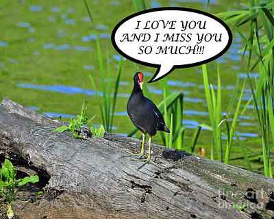 Moorhen Photograph - Moorhen Miss You Card by Al Powell Photography USA